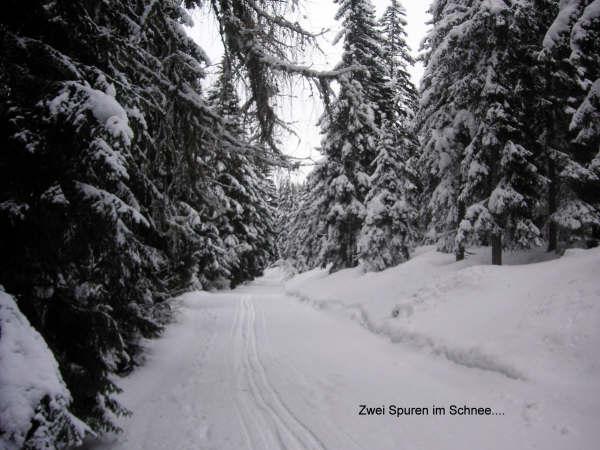 Wandeltocht naar de gipfel van de gerlitzen 7-Zwei-Spuren-im-Schnee